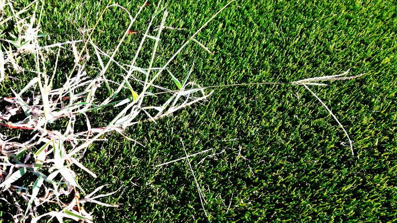 Bild von perfekt gepflegtem Rasen