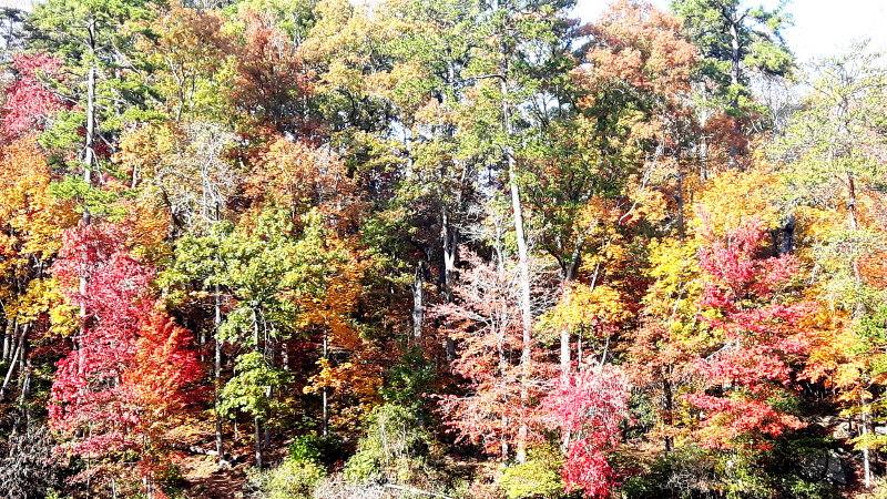 Foto von Herbstwald