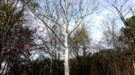 Foto von Baum