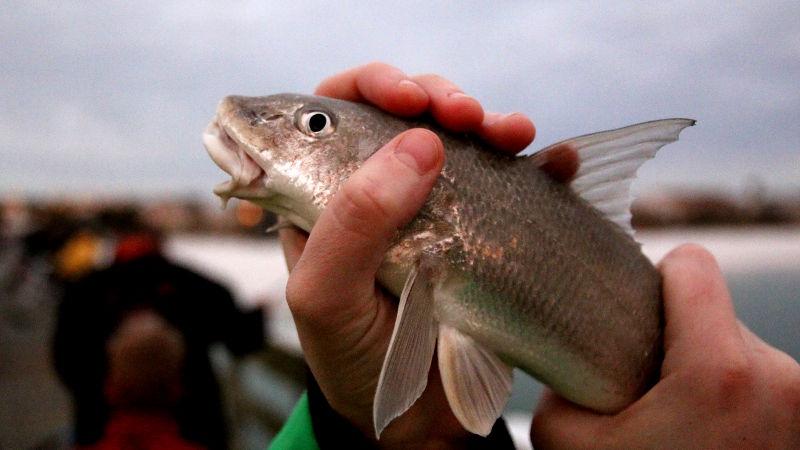 Foto von Fisch