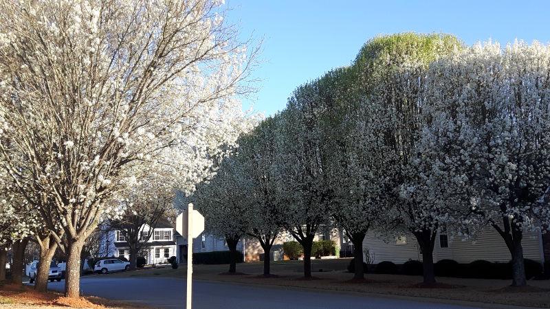 Foto von blühenden Bäumen