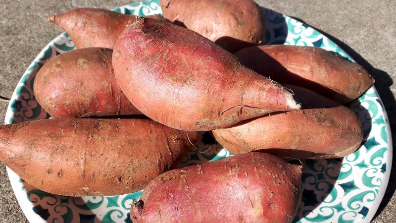 Foto von Süßkartoffeln